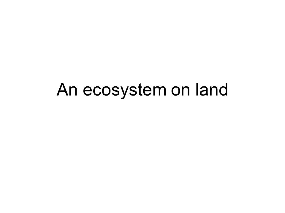 An ecosystem on land