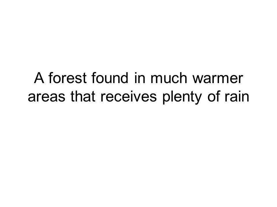 A forest found in much warmer areas that receives plenty of rain