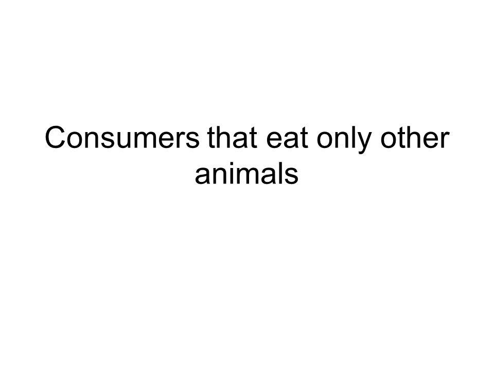 Consumers that eat only other animals