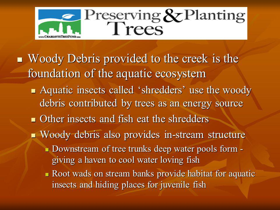 Woody Debris provided to the creek is the foundation of the aquatic ecosystem Woody Debris provided to the creek is the foundation of the aquatic ecosystem Aquatic insects called 'shredders' use the woody debris contributed by trees as an energy source Aquatic insects called 'shredders' use the woody debris contributed by trees as an energy source Other insects and fish eat the shredders Other insects and fish eat the shredders Woody debris also provides in-stream structure Woody debris also provides in-stream structure Downstream of tree trunks deep water pools form - giving a haven to cool water loving fish Downstream of tree trunks deep water pools form - giving a haven to cool water loving fish Root wads on stream banks provide habitat for aquatic insects and hiding places for juvenile fish Root wads on stream banks provide habitat for aquatic insects and hiding places for juvenile fish