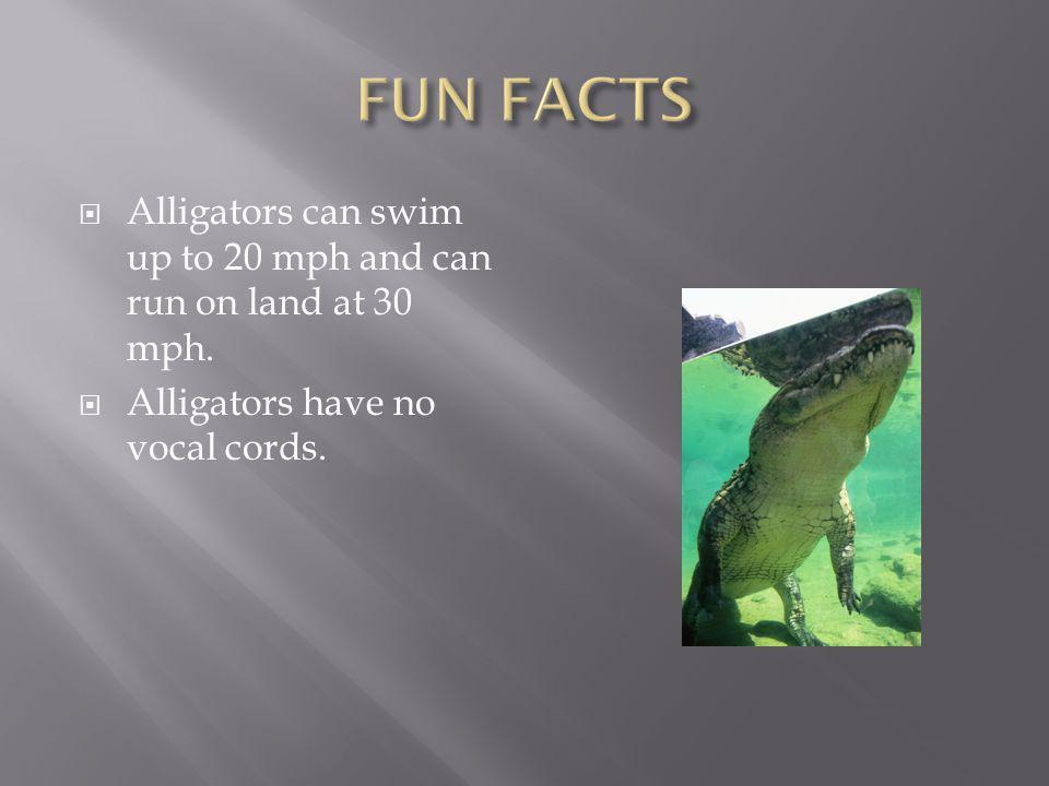  Alligators can swim up to 20 mph and can run on land at 30 mph.  Alligators have no vocal cords.