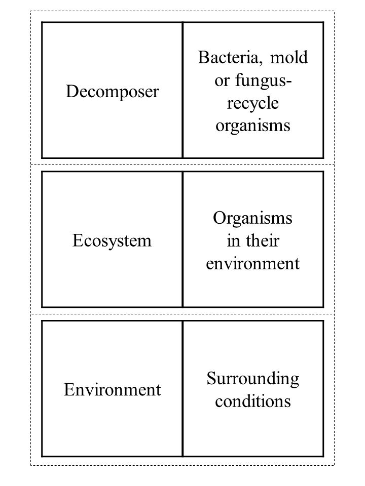 Environment Surrounding conditions Ecosystem Organisms in their environment Decomposer Bacteria, mold or fungus- recycle organisms