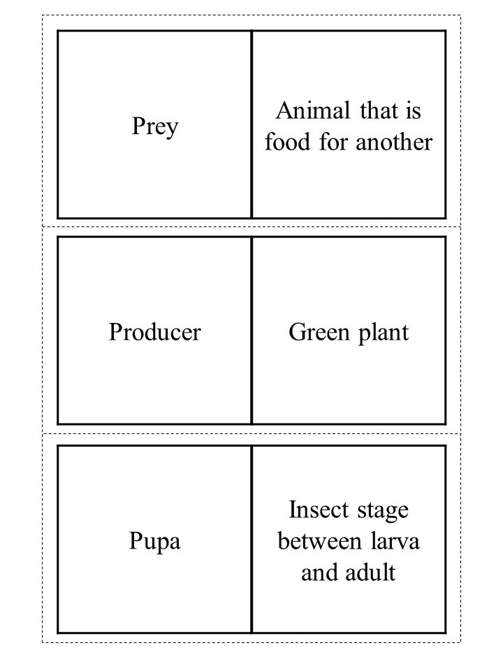 ProducerGreen plant Prey Animal that is food for another Pupa Insect stage between larva and adult