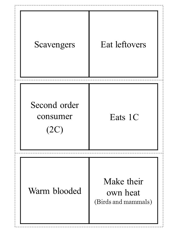 Second order consumer (2C) Eats 1C ScavengersEat leftovers Warm blooded Make their own heat (Birds and mammals)