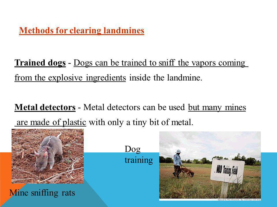 Trained dogs - Dogs can be trained to sniff the vapors coming from the explosive ingredients inside the landmine.