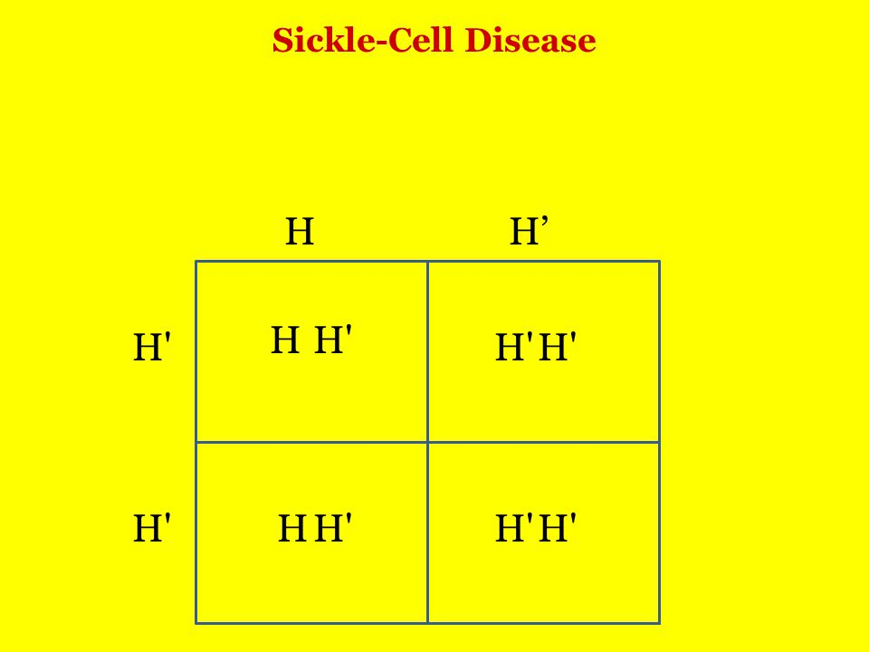 Sickle-Cell Disease H H H' H H H