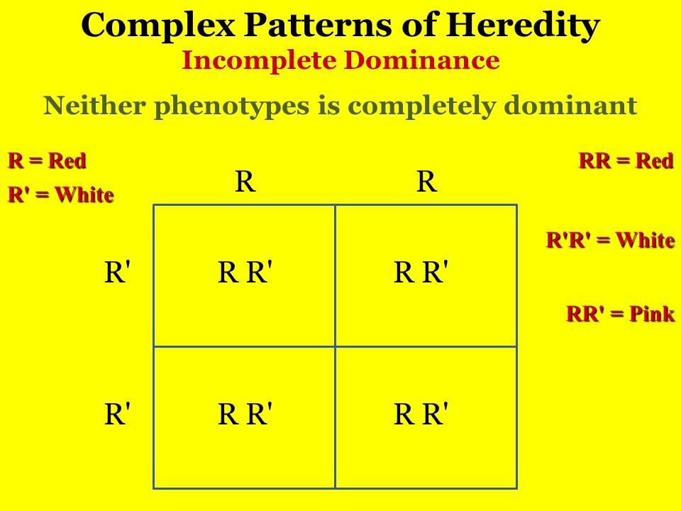 Complex Patterns of Heredity Incomplete Dominance RR R RR RR Neither phenotypes is completely dominant R = Red R = White RR = Pink RR = Red R R = White