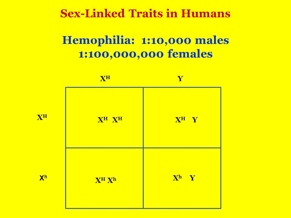 Sex-Linked Traits in Humans Hemophilia: 1:10,000 males 1:100,000,000 females XHXH XhXh Y XHXH Y Y XHXH XHXH XhXh XhXh XHXH XHXH
