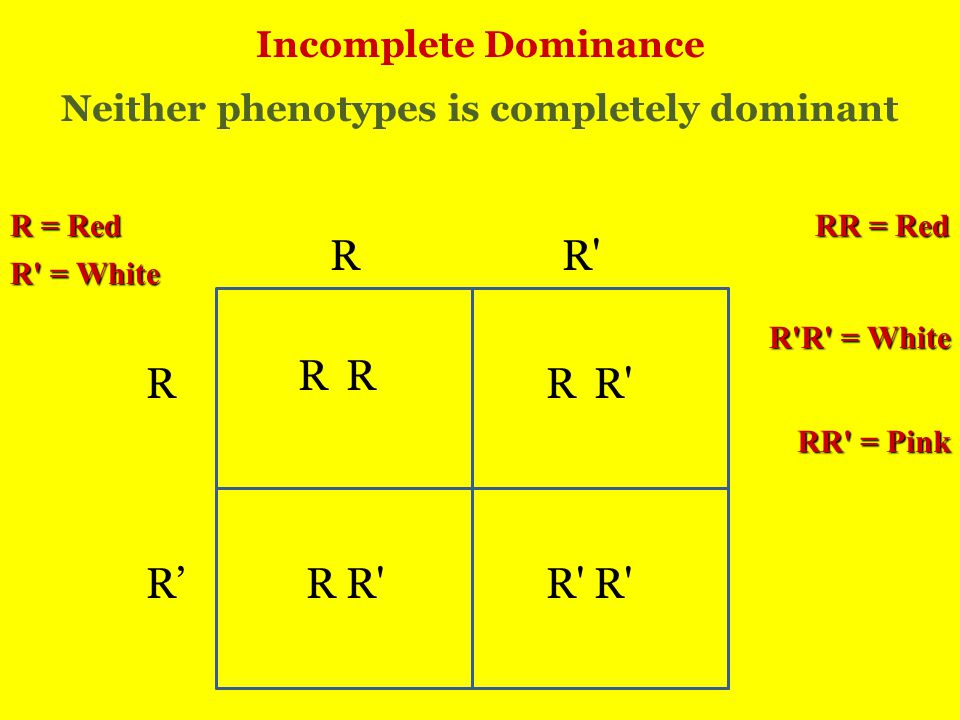 Incomplete Dominance R R R R' R R RR R Neither phenotypes is completely dominant R = Red R = White RR = Red R R = White RR = Pink