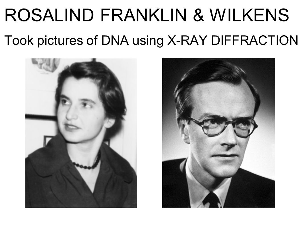 ROSALIND FRANKLIN & WILKENS Took pictures of DNA using X-RAY DIFFRACTION