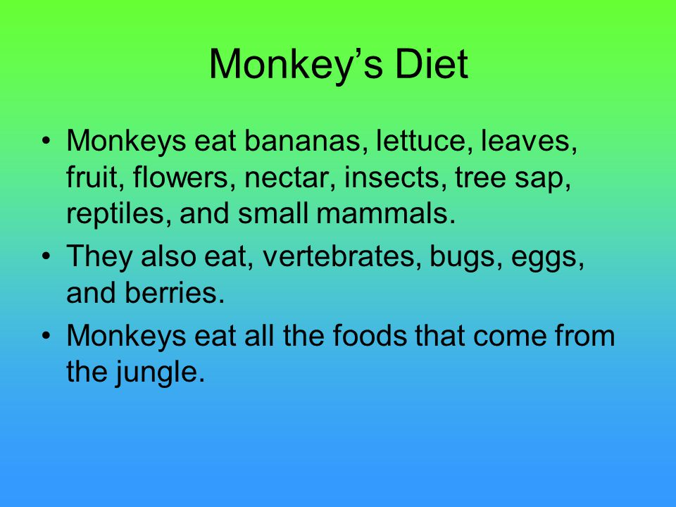 Monkey's Diet Monkeys eat bananas, lettuce, leaves, fruit, flowers, nectar, insects, tree sap, reptiles, and small mammals.