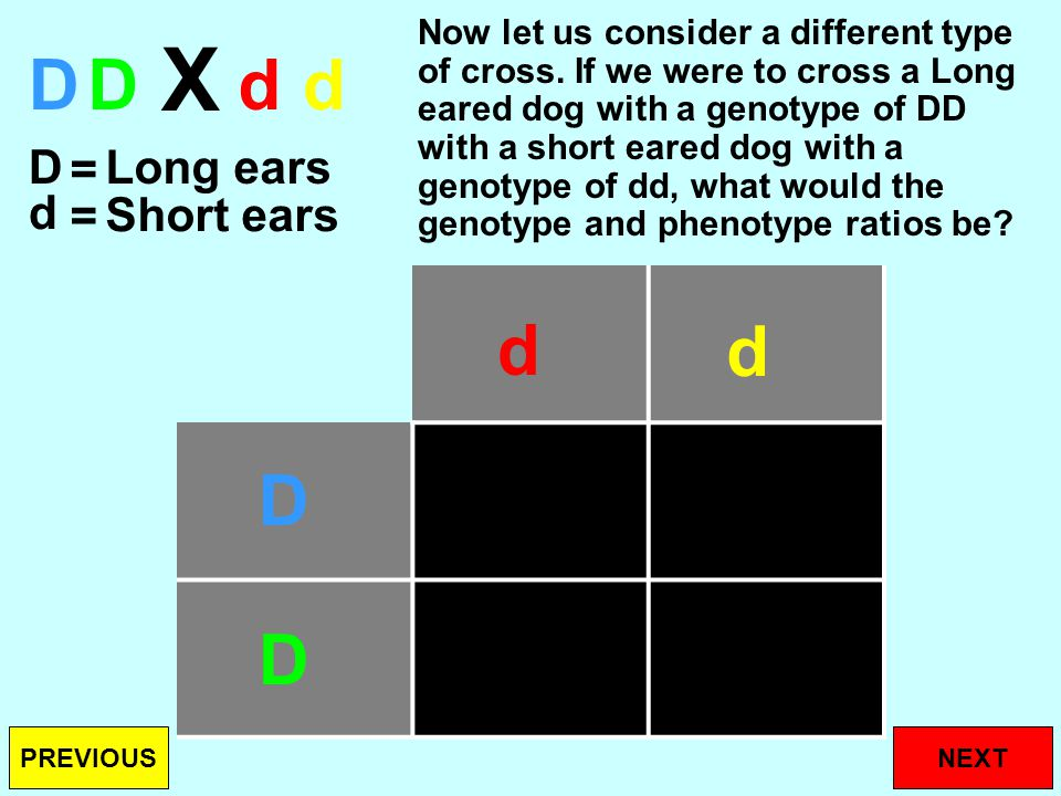 DD d Dd Genotype ratio Phenotype ratio Your Genotype ratio would be: DD = 1, Dd = 2, dd = 1 (1:2:1) Your Phenotype ratio would be: Long ears = 3, Short ears = 1 (3:1) d D d NEXTPREVIOUS D d D d DdDd X D d = = Long ears Short ears