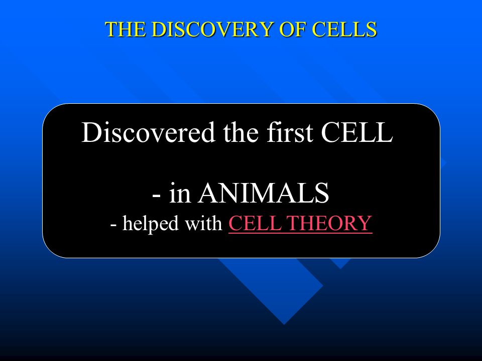 THE DISCOVERY OF CELLS Discovered the first CELL - in PLANTS - helped with CELL THEORY
