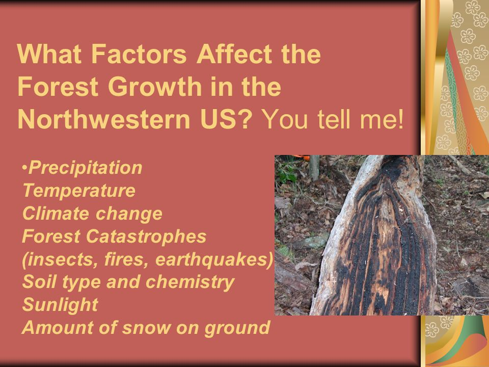 What Factors Affect the Forest Growth in the Northwestern US.