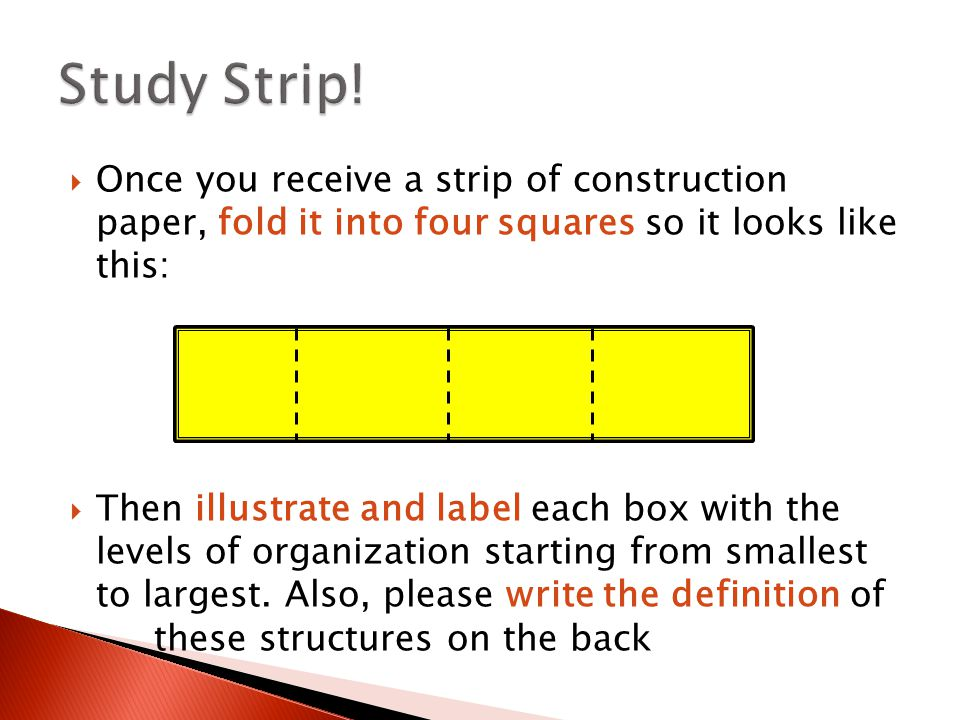  Once you receive a strip of construction paper, fold it into four squares so it looks like this:  Then illustrate and label each box with the levels of organization starting from smallest to largest.