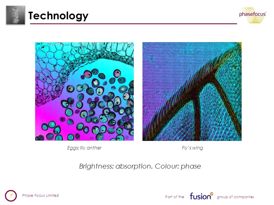 Phase Focus Limited 7 Part of the group of companies Technology Eggs: lily antherFly's wing Brightness: absorption.