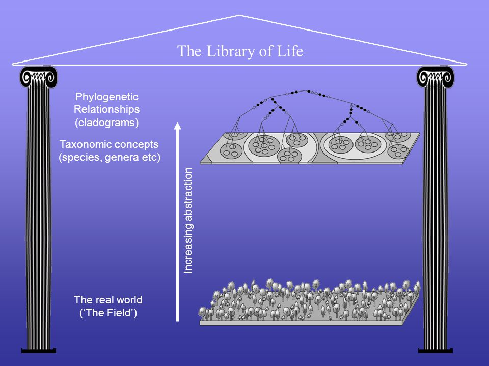 The Library of Life The real world ('The Field') Taxonomic concepts (species, genera etc) Increasing abstraction Phylogenetic Relationships (cladograms)