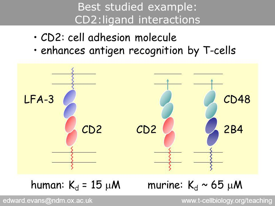 edward.evans@ndm.ox.ac.ukwww.t-cellbiology.org/teaching Best studied example: CD2:ligand interactions CD48LFA-3 CD2 CD2: cell adhesion molecule enhances antigen recognition by T-cells human: K d = 15  Mmurine: K d ~ 65  M 2B4CD2