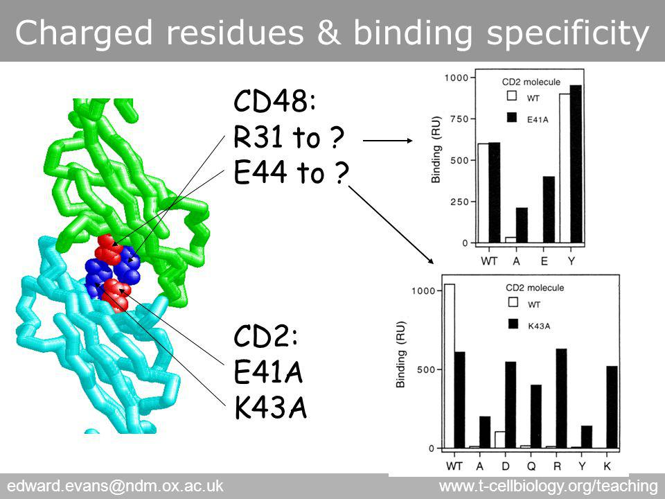edward.evans@ndm.ox.ac.ukwww.t-cellbiology.org/teaching Charged residues & binding specificity CD48: R31 to .