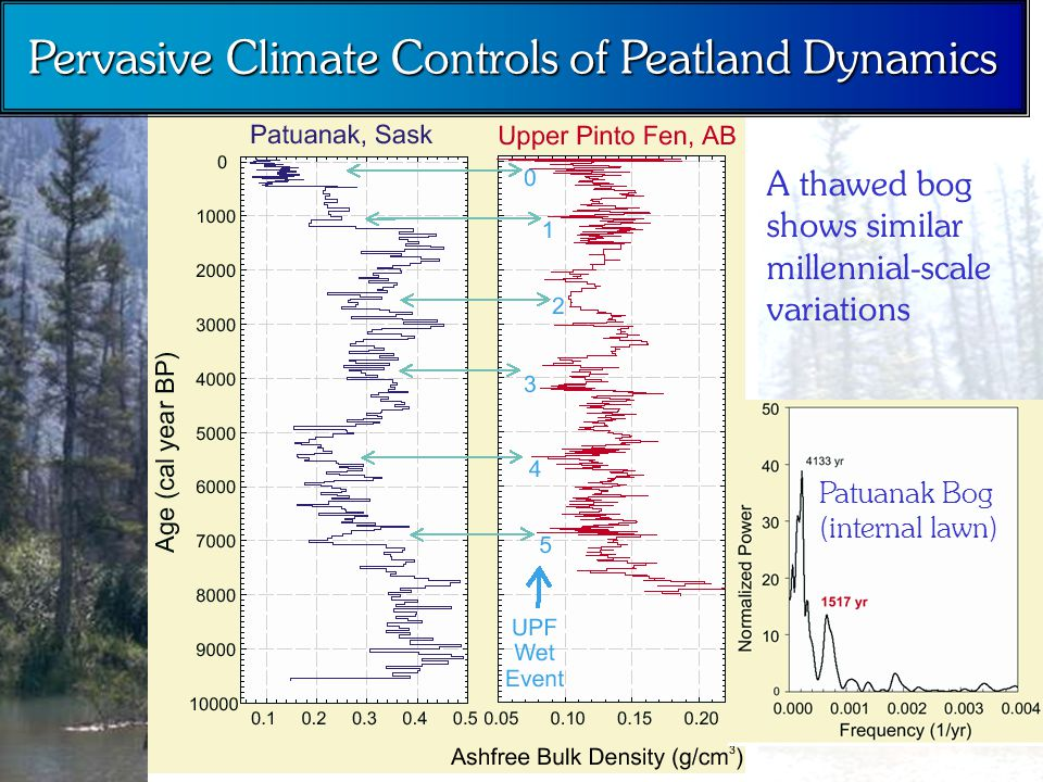 Pervasive Climate Controls of Peatland Dynamics A thawed bog shows similar millennial-scale variations Patuanak Bog (internal lawn)