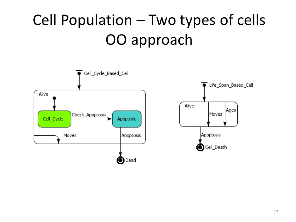 Cell Population – Two types of cells OO approach 13