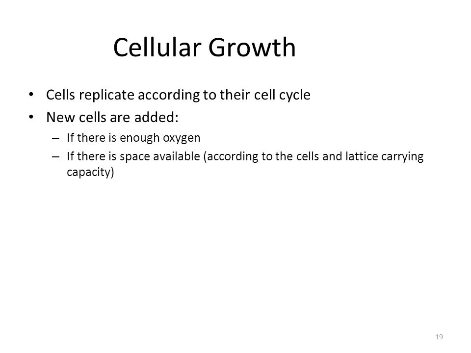 Cellular Growth Cells replicate according to their cell cycle New cells are added: – If there is enough oxygen – If there is space available (according to the cells and lattice carrying capacity) 19