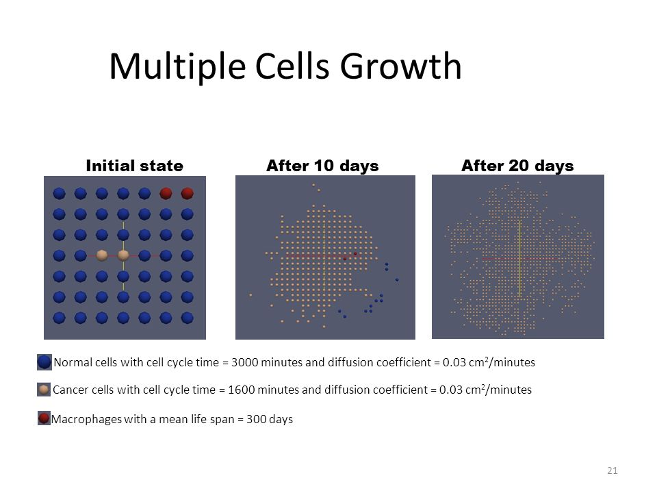 Multiple Cells Growth 21 Normal cells with cell cycle time = 3000 minutes and diffusion coefficient = 0.03 cm 2 /minutes Cancer cells with cell cycle time = 1600 minutes and diffusion coefficient = 0.03 cm 2 /minutes Initial state After 10 days After 20 days Macrophages with a mean life span = 300 days