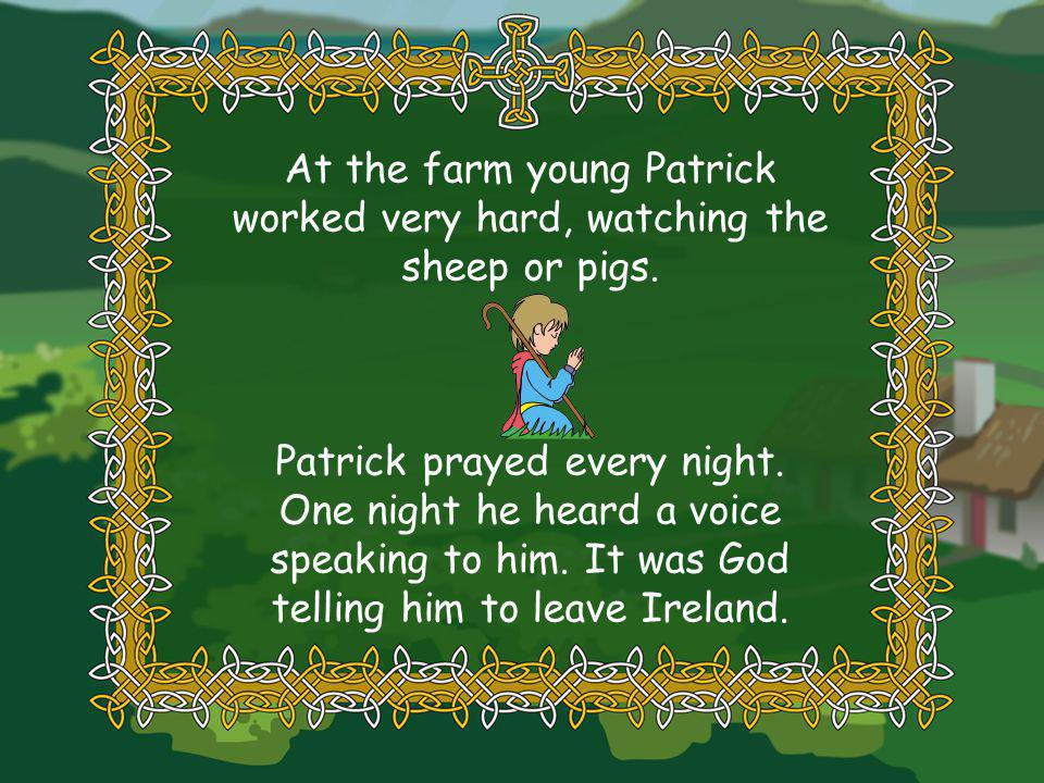 At the farm young Patrick worked very hard, watching the sheep or pigs.