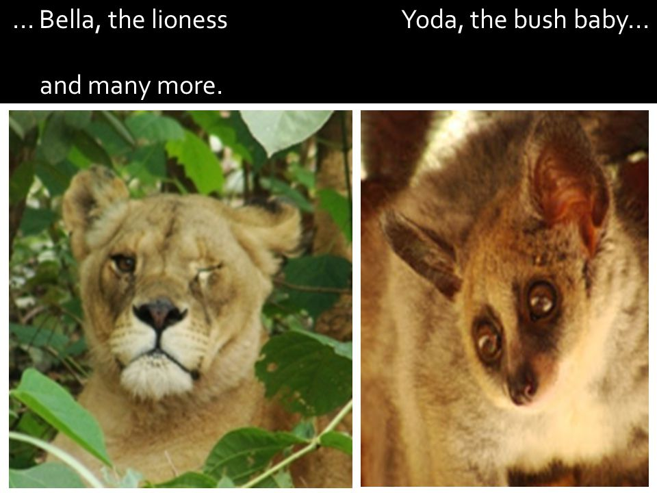 ... Bella, the lioness Yoda, the bush baby... and many more.