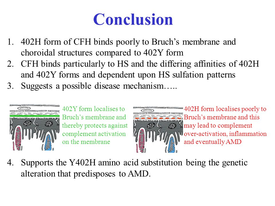Conclusion 402Y form localises to Bruch's membrane and thereby protects against complement activation on the membrane 402H form localises poorly to Bruch's membrane and this may lead to complement over-activation, inflammation and eventually AMD 1.402H form of CFH binds poorly to Bruch's membrane and choroidal structures compared to 402Y form 2.CFH binds particularly to HS and the differing affinities of 402H and 402Y forms and dependent upon HS sulfation patterns 3.Suggests a possible disease mechanism…..