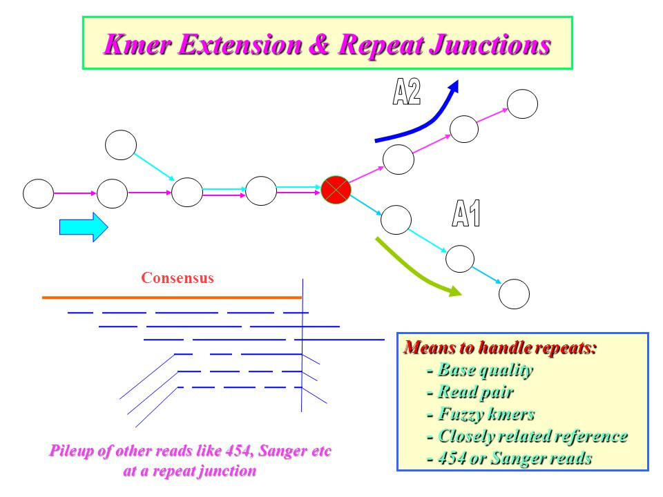 Means to handle repeats: - Base quality - Base quality - Read pair - Read pair - Fuzzy kmers - Fuzzy kmers - Closely related reference - Closely related reference - 454 or Sanger reads - 454 or Sanger reads Kmer Extension & Repeat Junctions Pileup of other reads like 454, Sanger etc at a repeat junction Consensus