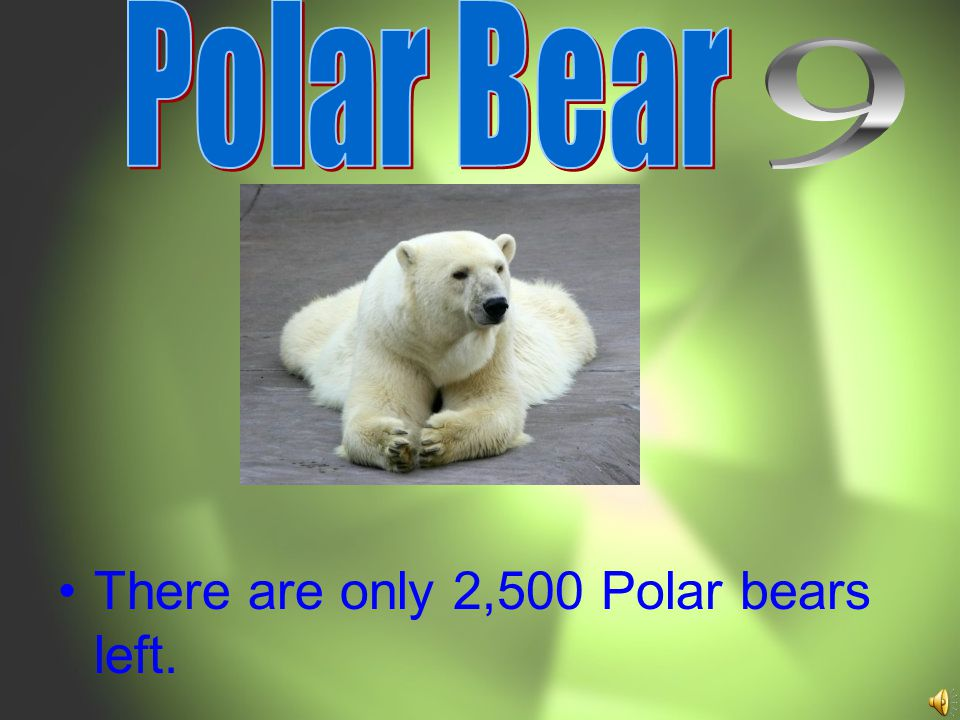 There are only 2,500 Polar bears left.