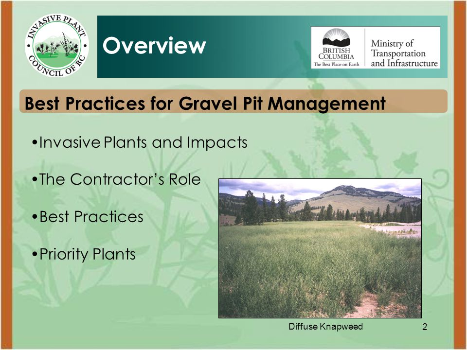 2 Best Practices for Gravel Pit Management Invasive Plants and Impacts The Contractor's Role Best Practices Priority Plants Overview Diffuse Knapweed