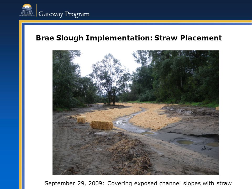 Gateway Program Brae Slough Implementation: Straw Placement September 29, 2009: Covering exposed channel slopes with straw