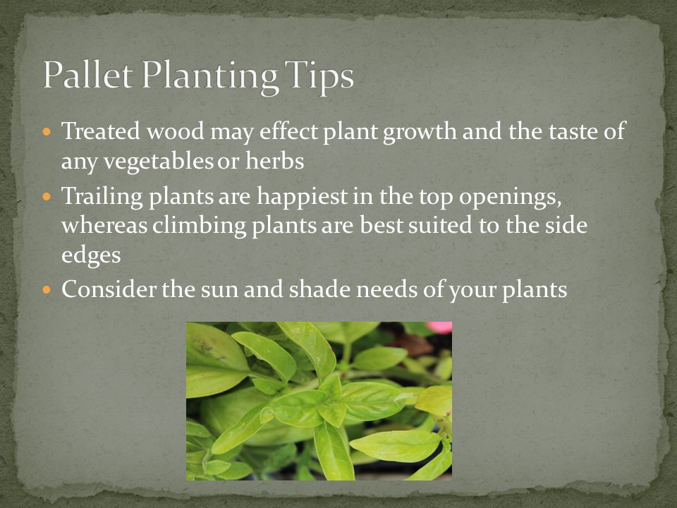 Treated wood may effect plant growth and the taste of any vegetables or herbs Trailing plants are happiest in the top openings, whereas climbing plants are best suited to the side edges Consider the sun and shade needs of your plants