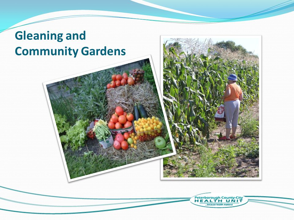 Gleaning and Community Gardens