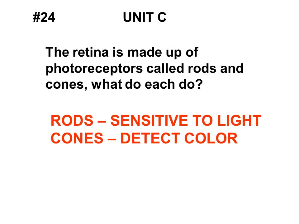 #24UNIT C The retina is made up of photoreceptors called rods and cones, what do each do.