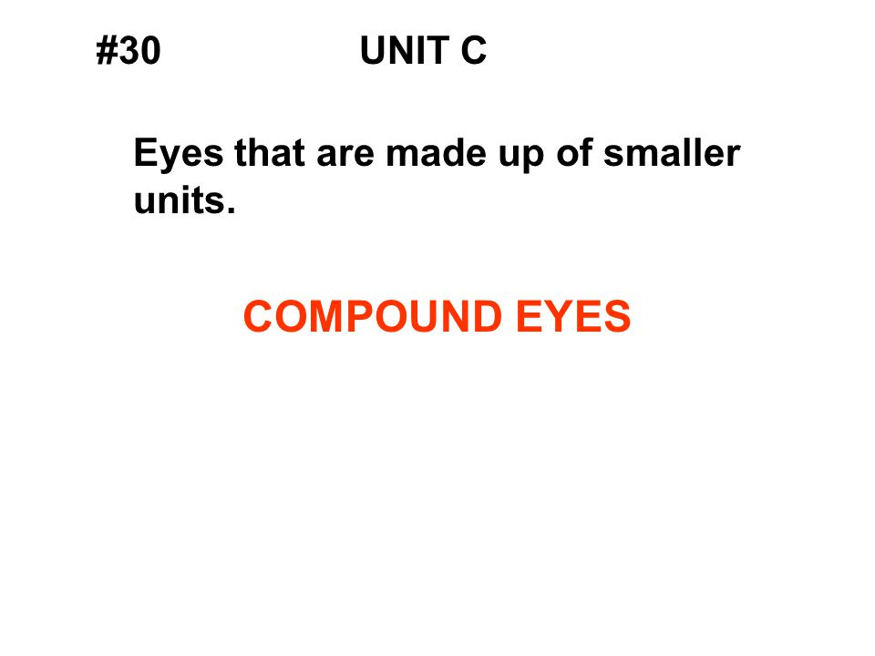#30UNIT C Eyes that are made up of smaller units. COMPOUND EYES