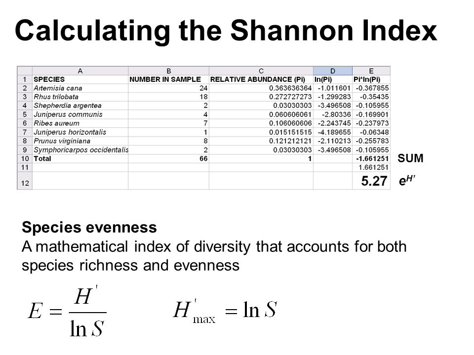 Calculating the Shannon Index SUM e H' Species evenness A mathematical index of diversity that accounts for both species richness and evenness