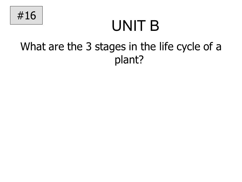 UNIT B What are the 3 stages in the life cycle of a plant #16
