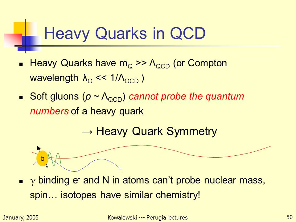 January, 2005 Kowalewski --- Perugia lectures 50 Heavy Quarks in QCD Heavy Quarks have m Q >> Λ QCD (or Compton wavelength λ Q << 1/Λ QCD ) Soft gluons (p ~ Λ QCD ) cannot probe the quantum numbers of a heavy quark → Heavy Quark Symmetry γ binding e - and N in atoms can't probe nuclear mass, spin… isotopes have similar chemistry.