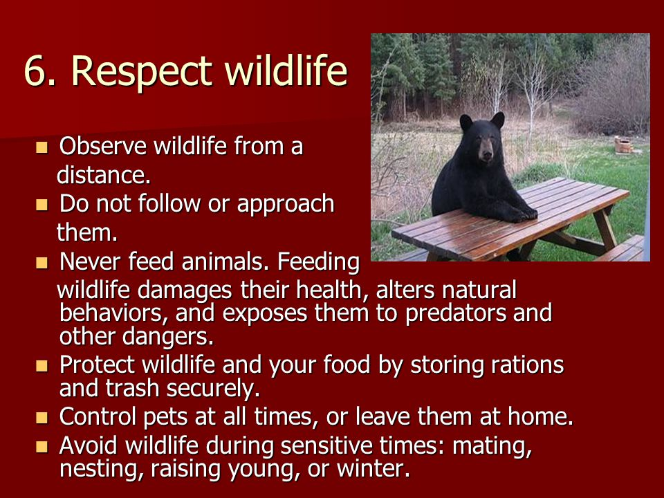 6. Respect wildlife Observe wildlife from a Observe wildlife from a distance.