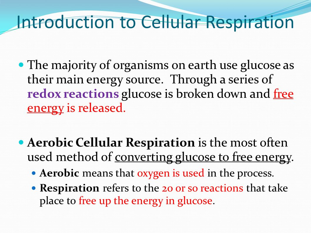 Introduction to Cellular Respiration The majority of organisms on earth use glucose as their main energy source.