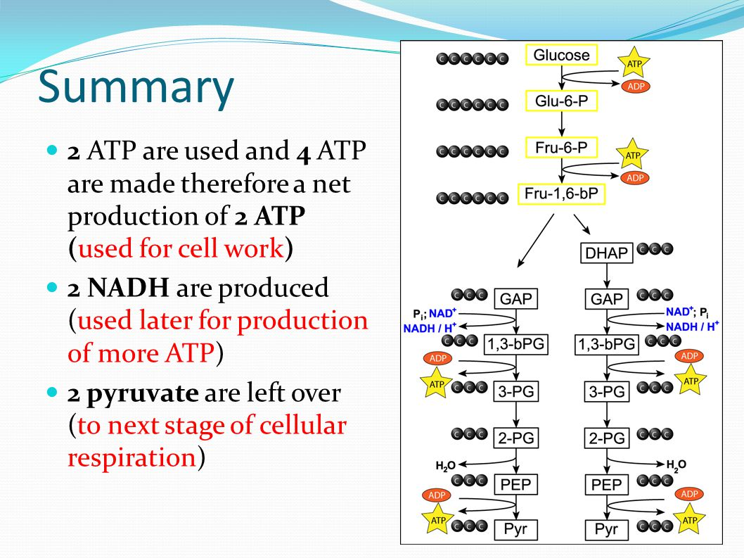 Summary 2 ATP are used and 4 ATP are made therefore a net production of 2 ATP (used for cell work) 2 NADH are produced (used later for production of more ATP) 2 pyruvate are left over (to next stage of cellular respiration)