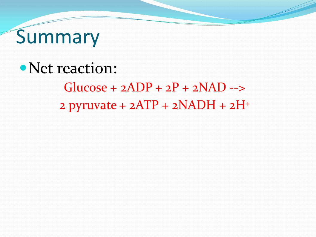 Summary Net reaction: Glucose + 2ADP + 2P + 2NAD --> 2 pyruvate + 2ATP + 2NADH + 2H +