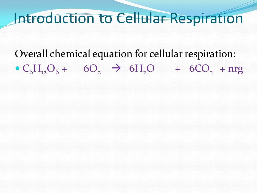 Introduction to Cellular Respiration Overall chemical equation for cellular respiration: C 6 H 12 O 6 + 6O 2  6H 2 O + 6CO 2 + nrg