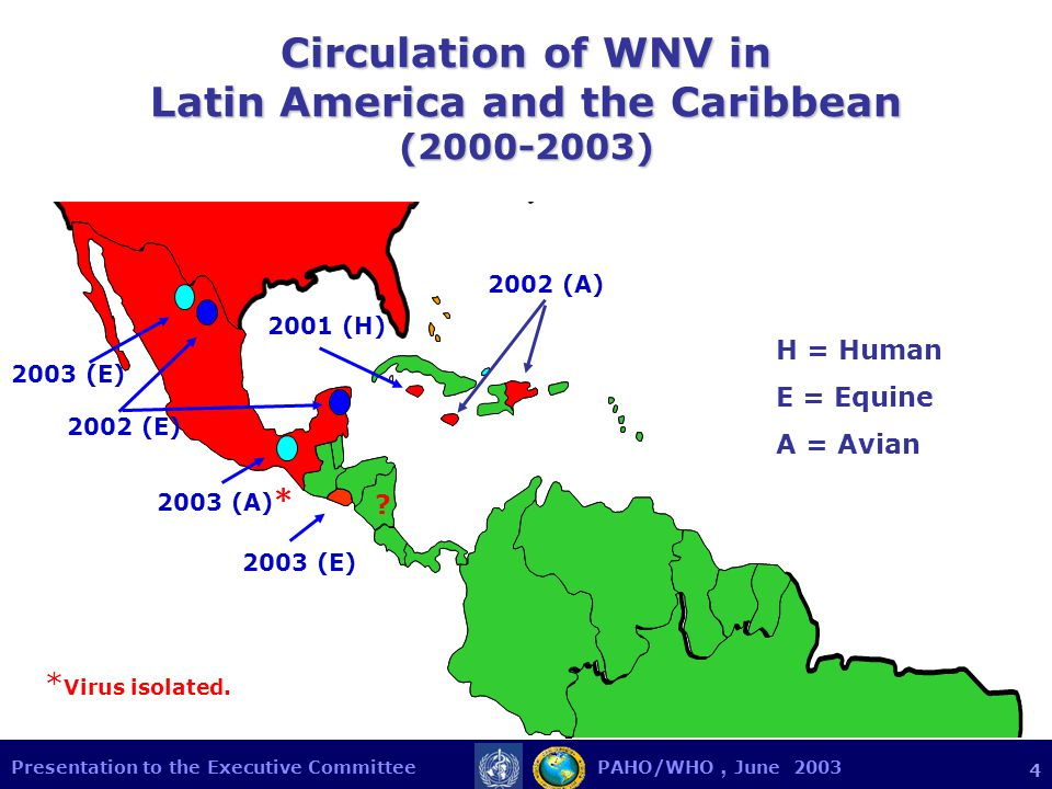 Presentation to the Executive Committee PAHO/WHO, June Circulation of WNV in Latin America and the Caribbean ( ) 2003 (E) 2002 (A) 2001 (H) 2002 (E) 2003 (A) * 2003 (E) * Virus isolated.